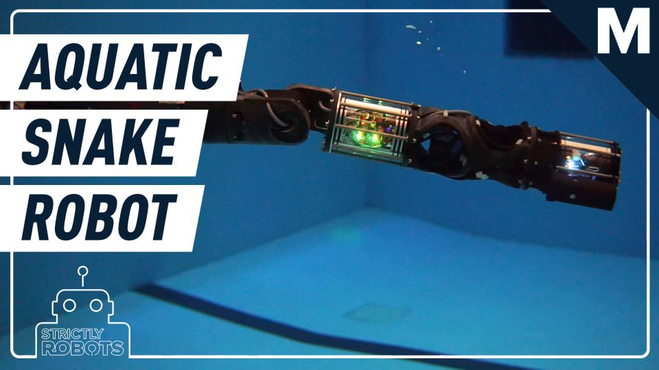 we-want-to-swim-with-this-slithering,-underwater-robot-snake-—-strictly-robots
