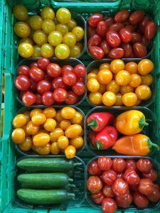 Sommergemüse Tomaten und Snackgurken