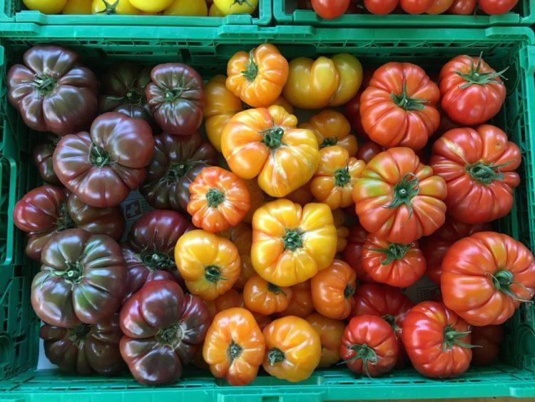 Tomaten gelb, rot, violett