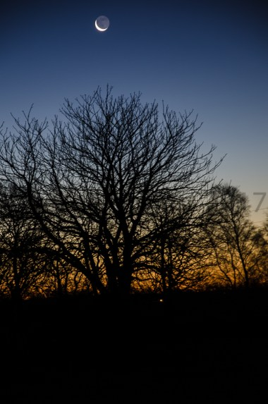 New Moon over a tree