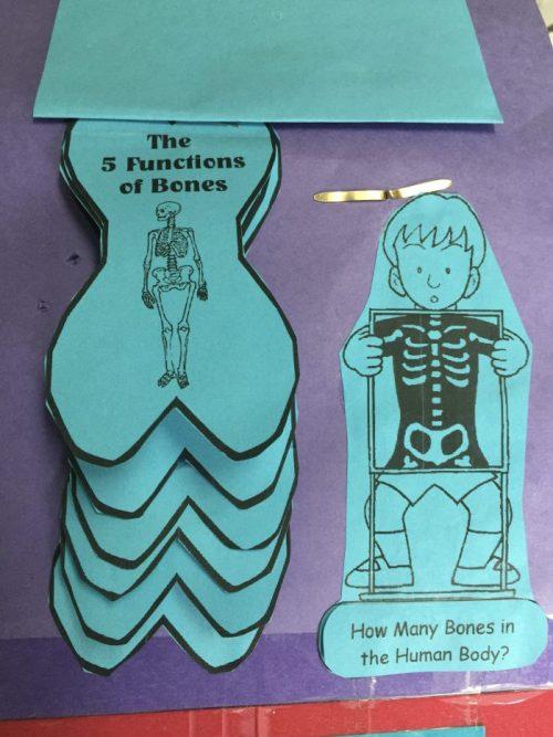 Human Body lapbook