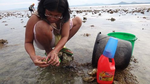 Woman reef gleaning on a reef on the Danajon Bank, Bohol Province, Central Philippines. Photo: Danika Kleiber.