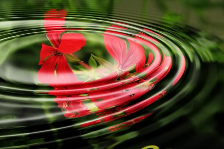geranium_wave_water_rings_circle_waves_circles_wallpaper_background_image-964222.jpg!d