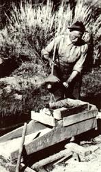 David Goldbaum (1858-1930)