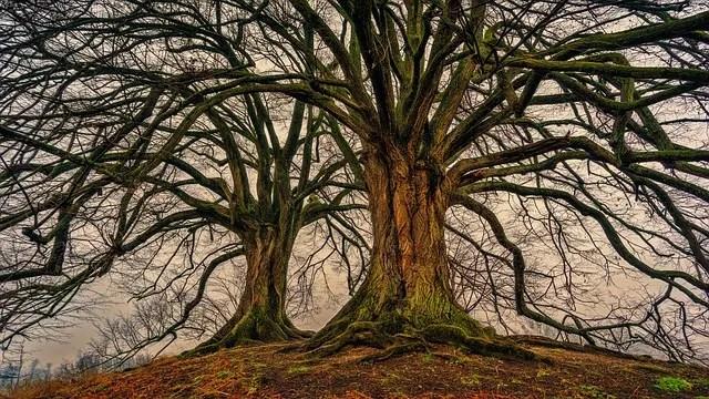 A beautiful tree