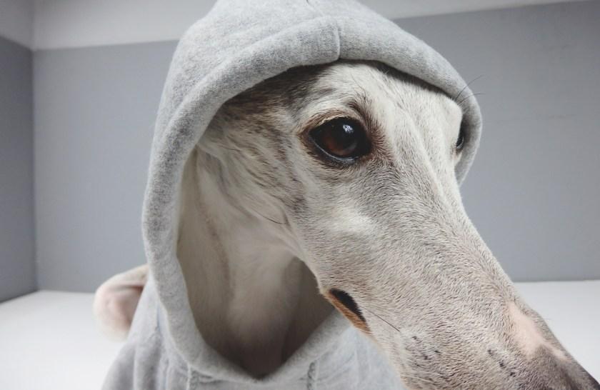genes-new-hoodie