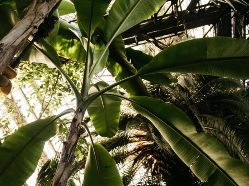 Bismillahirrahmanirrahim tali pelepah pisang harga mulai dari 6200/meter handmade, bisa request ukuran (po) #jualbungacantel#preserved#driedflowers. Praktis! 7 Kerajinan dari Pelepah Pisang dan Cara Pembuatannya
