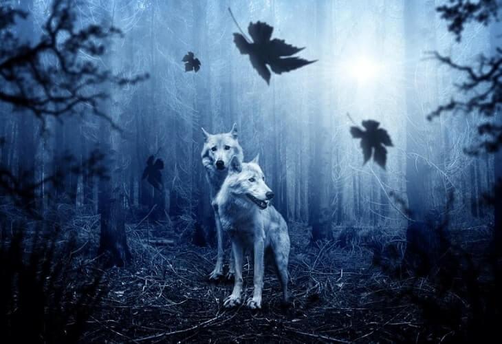 serigala pemakan daging