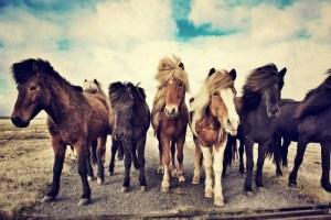 horses-1268256_960_720