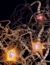 Fig1. 許多在腦內的細胞均衡表現來自親源兩組基因,但有些細胞只表現其中的一組。倘若表現的基因為致病基因,該怎麼辦?