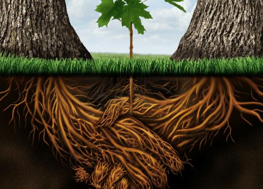植物的種類是否影響其根部菌相多樣性