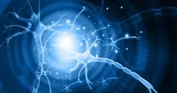 76965324 - 3d illustration of human neuron