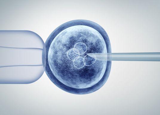 全球第 1 個人猴混合胚胎出現!具藥物臨床前試驗潛力