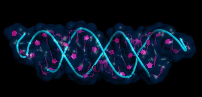 CRISPR epigenetic inheritance