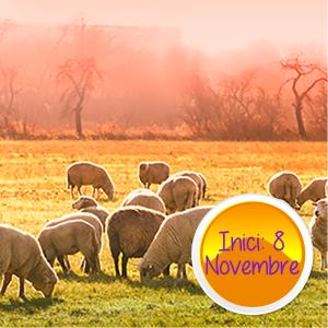 Subvencionada treballadors | Benestar animal: mòdul general + mòdul específic (20 h)