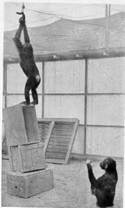 Monkeys in our Midst - GeneralLeadership.com