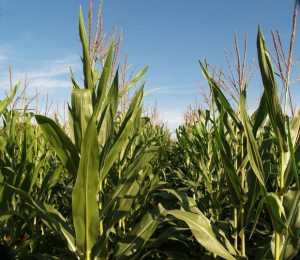 Harvest - GeneralLeadership.com