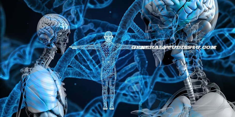 The Humans Genetic DNA and RNA