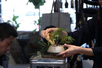 盆栽ワークショップ | GENERAL SUPPLY