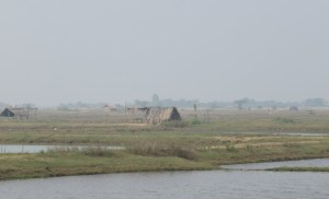Landscape in the delta