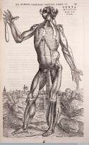 Illustration from Vesalius's De Humani corporis fabrica, 1543 © Wellcome Library, London  Mead owned some of Vesalius's original anatomical drawings