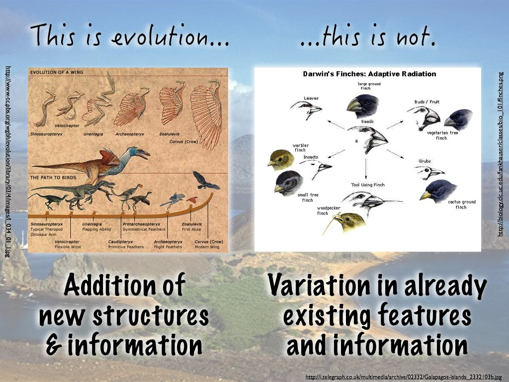 Students Ask Do Darwin S Finches Show Evolution In