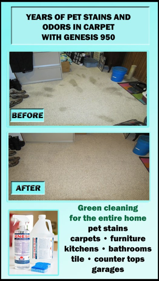 How To Remove Pet Odor From Carpet And Furniture Lets
