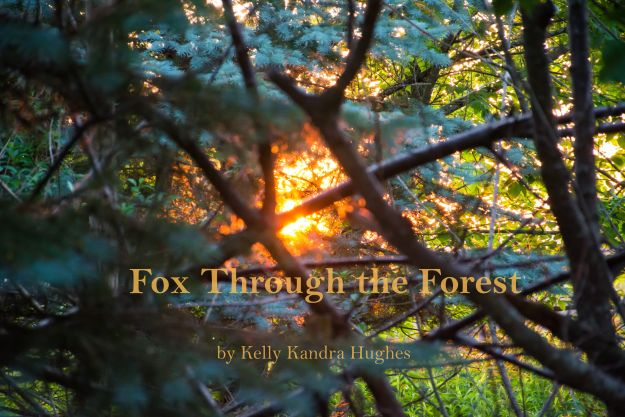 fox-through-the-forest