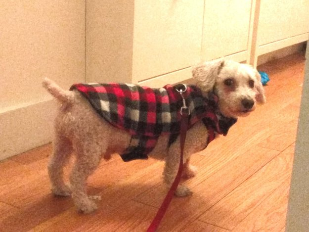 Schroeder in coat