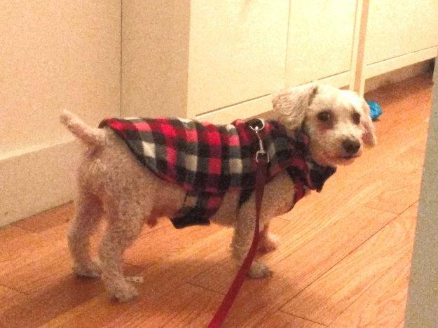 Schroeder in coat