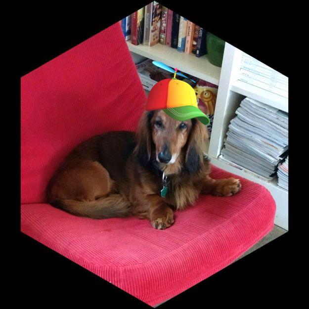 Oscar with Beanie cap