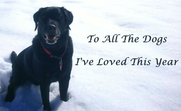 To All The Dogs I've Loved This Year 75