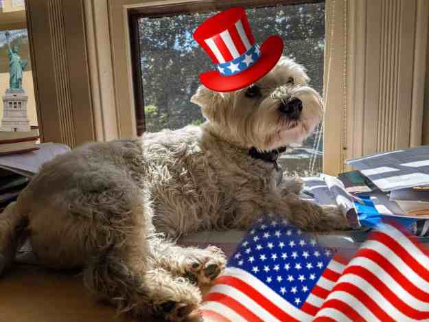 Patriotic Pups for the Fourth of July 30