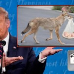 FACT CHECK: Coyotes have only delivered two babies over border this year