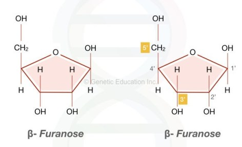 The image shows one of the major component of DNA, the pentose sugar in the beta-furanose form.