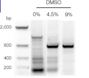 DMSO a PCR enhancer: Role of DMSO in PCR