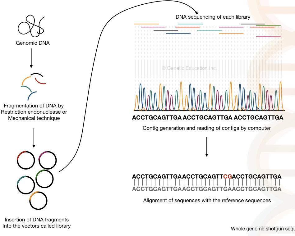 recent advances in forensic dna analysis