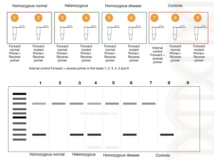 What is ARMS-PCR or allele-specific PCR?