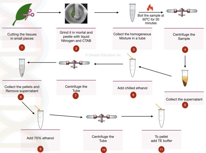 CTAB DNA extraction buffer for plant DNA extraction