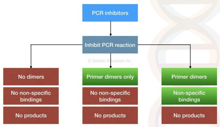 Effect of PCR inhibitors on PCR amplification