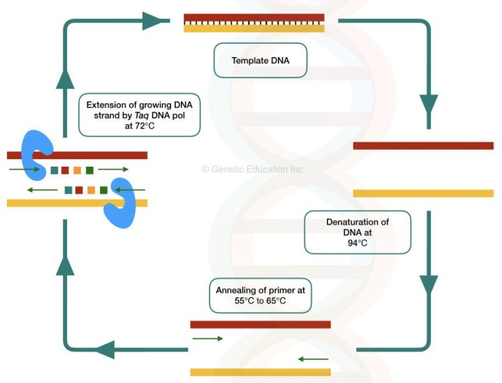A complete guide of polymerase chain reaction, What is a hot start PCR?
