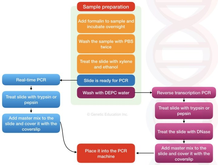 What is in situ PCR?