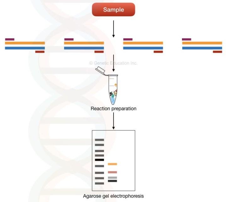 What is a multiplex PCR?