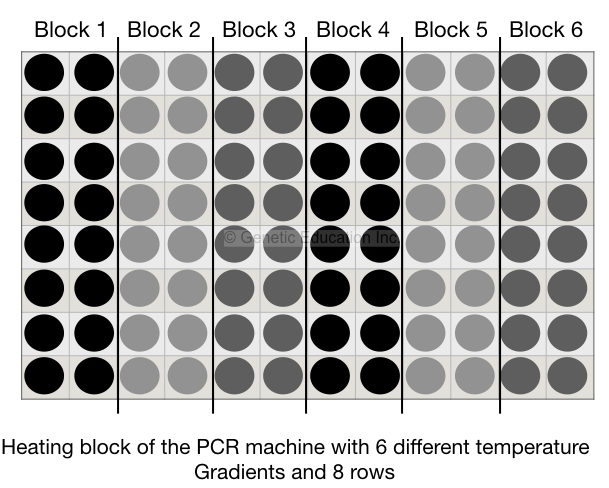 Optimize your PCR reaction using the Gradient PCR