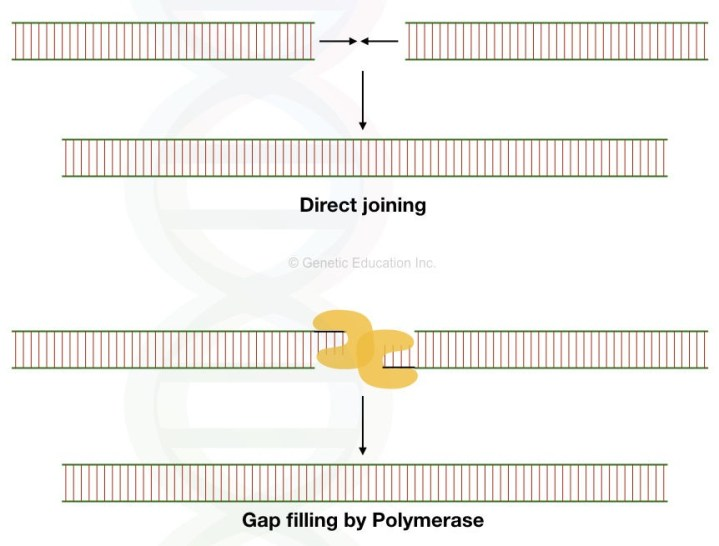 The mechanism of direct joining and joining via replication at a gap of previous position of transposon.