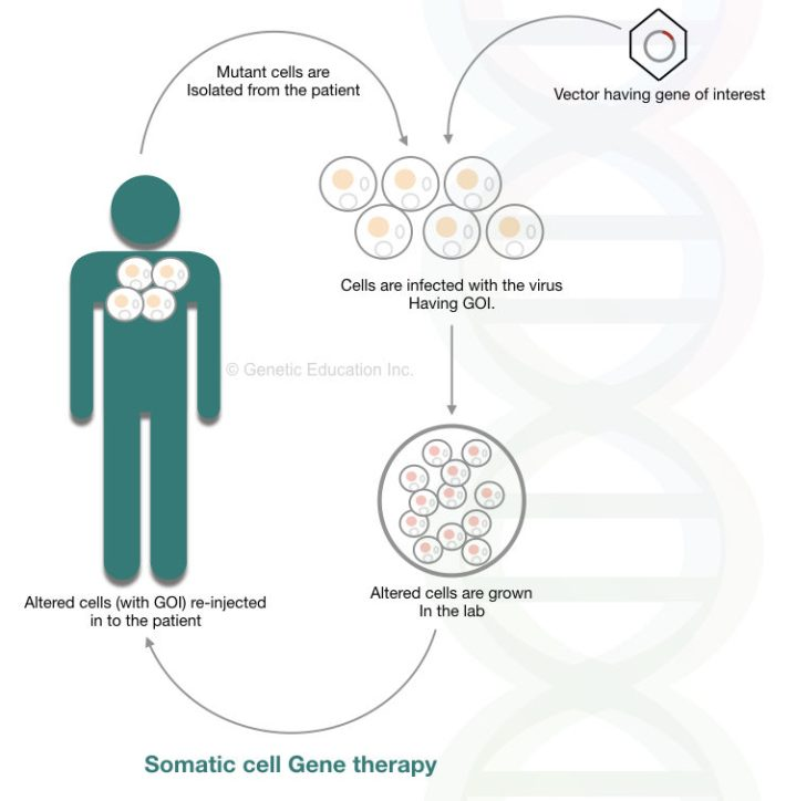 Somatic cell gene therapy method