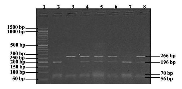 What Is A Dna Ladder And How To Prepare It A Complete