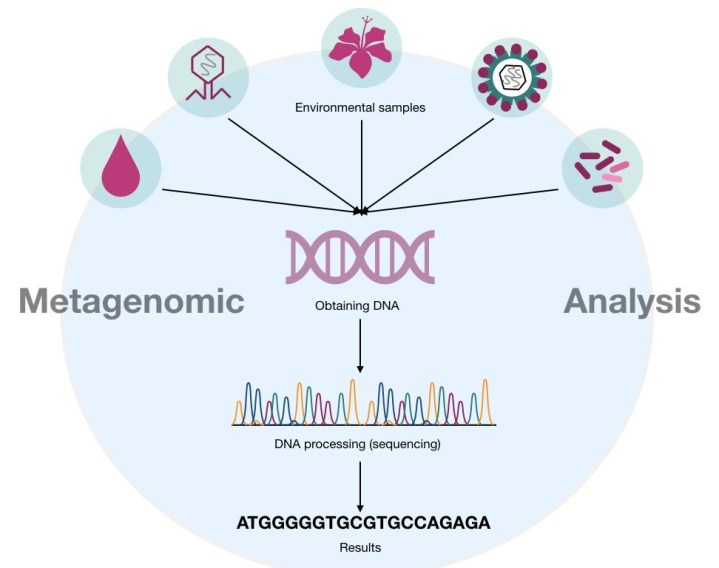 The outline of metagenomics analysis