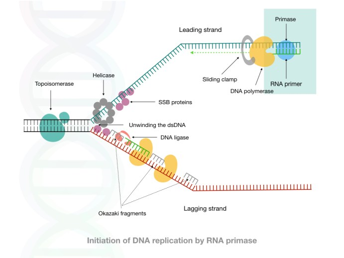 DNA Polymerases: Types, Roles and Significance in Biotechnology