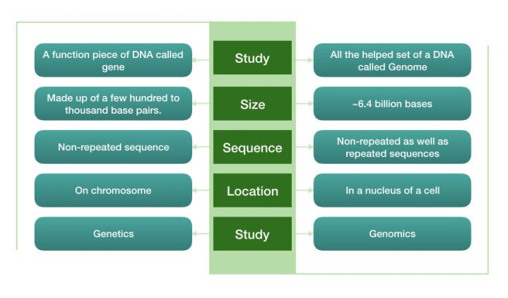 summary of genome Vs gene